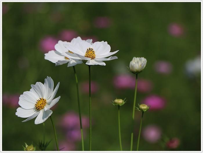 久しぶりの日帰りバスツアー、お花に関してはちょっと残念な結果だったけど、こればかりはね(´A`。)グスン_b0175688_00312500.jpg