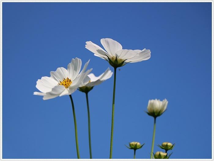 久しぶりの日帰りバスツアー、お花に関してはちょっと残念な結果だったけど、こればかりはね(´A`。)グスン_b0175688_00313187.jpg