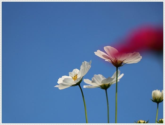 久しぶりの日帰りバスツアー、お花に関してはちょっと残念な結果だったけど、こればかりはね(´A`。)グスン_b0175688_00314372.jpg