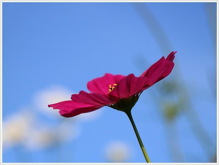 久しぶりの日帰りバスツアー、お花に関してはちょっと残念な結果だったけど、こればかりはね(´A`。)グスン_b0175688_00315408.jpg