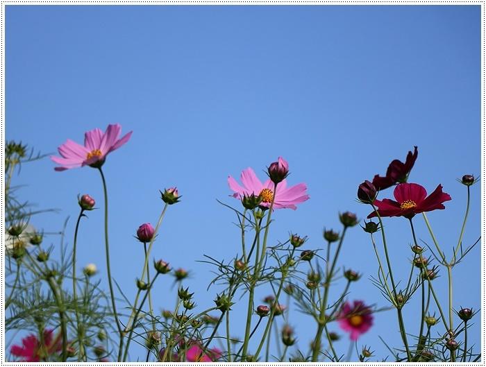 久しぶりの日帰りバスツアー、お花に関してはちょっと残念な結果だったけど、こればかりはね(´A`。)グスン_b0175688_00315947.jpg