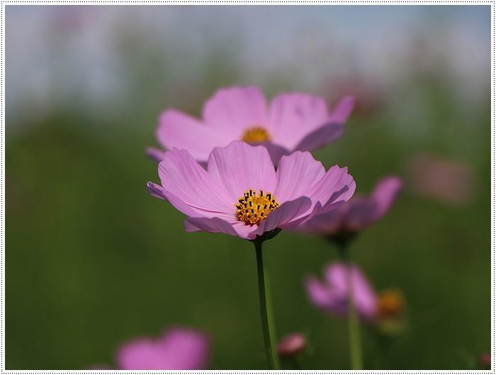 久しぶりの日帰りバスツアー、お花に関してはちょっと残念な結果だったけど、こればかりはね(´A`。)グスン_b0175688_00320470.jpg