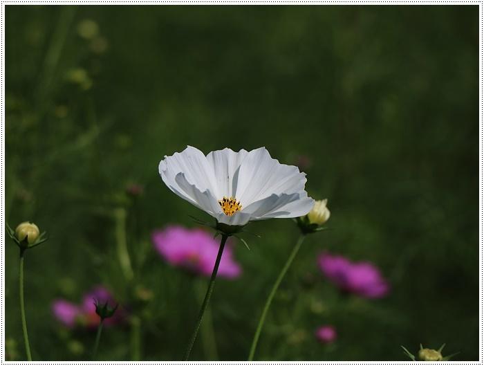 久しぶりの日帰りバスツアー、お花に関してはちょっと残念な結果だったけど、こればかりはね(´A`。)グスン_b0175688_00321155.jpg