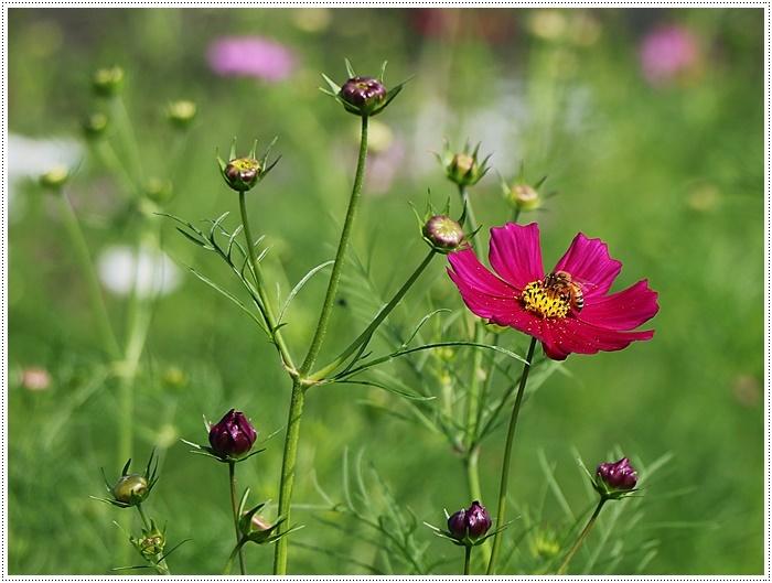 久しぶりの日帰りバスツアー、お花に関してはちょっと残念な結果だったけど、こればかりはね(´A`。)グスン_b0175688_00321698.jpg