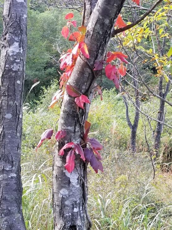 秋の訪れ_f0219710_09195125.jpg