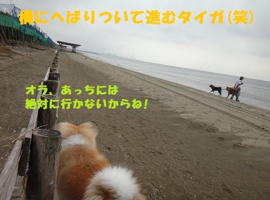 f0121712_14380734.jpg