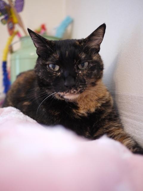 猫のお留守番 ワサビちゃん天ちゃん麦くん茶くん編。_a0143140_22485397.jpg