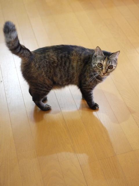 猫のお留守番 ワサビちゃん天ちゃん麦くん茶くん編。_a0143140_22503728.jpg