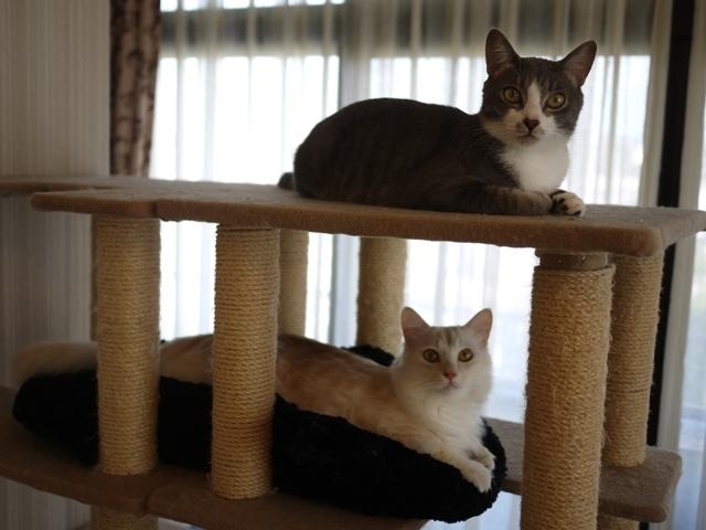 猫のお留守番 ワサビちゃん天ちゃん麦くん茶くん編。_a0143140_22513851.jpg
