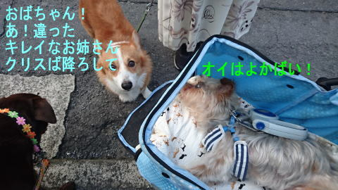 d0013645_20114737.jpg