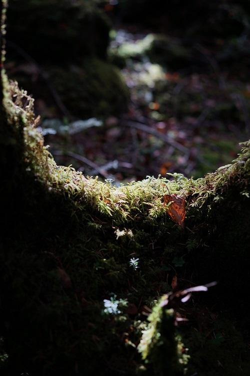 苔の森_a0292060_17111150.jpg