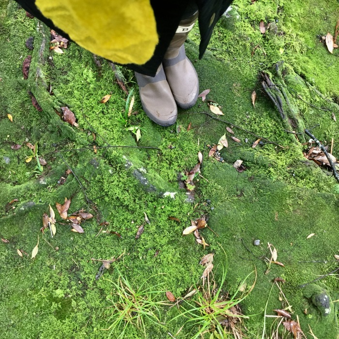 緑の世界で_d0105967_11512514.jpg