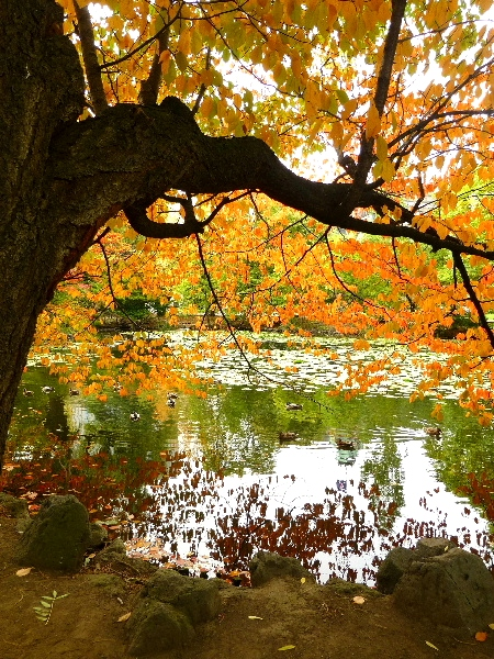 10月 ・ 道庁前庭の秋 (二)_d0084473_19511590.jpg