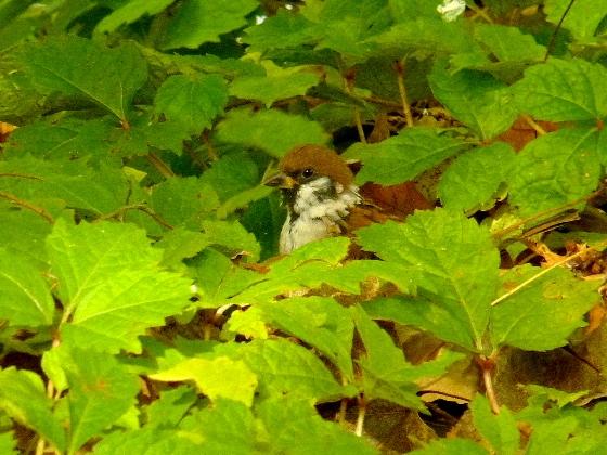 10月 ・ 道庁前庭の秋 (二)_d0084473_19513428.jpg