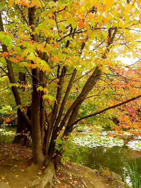 10月 ・ 道庁前庭の秋 (二)_d0084473_1951694.jpg