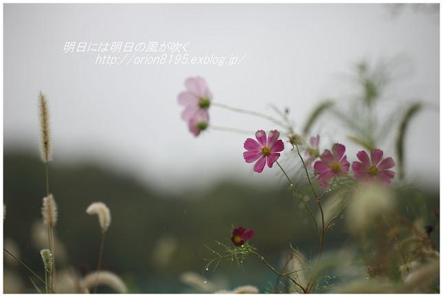 f0361079_20141942.jpg