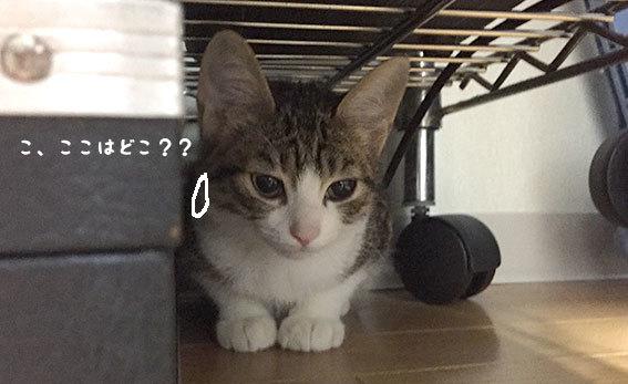 トロロくん、おかえり〜〜〜!!_d0071596_20140415.jpg