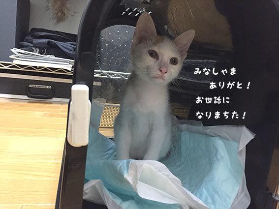 トロロくん、おかえり〜〜〜!!_d0071596_20150228.jpg