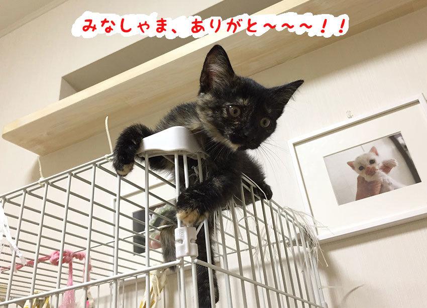 トロロくん、おかえり〜〜〜!!_d0071596_20561275.jpg