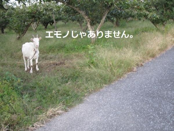f0143123_20063449.jpg