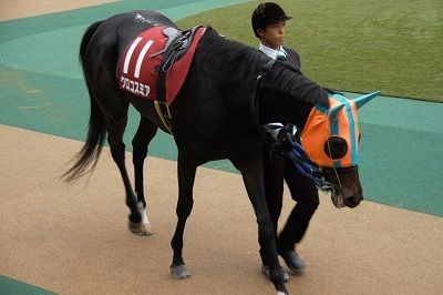 府中牝馬Sは、クロコスミアがGI馬3頭を振りきって逃げ切り重賞初制覇_b0015386_21332899.jpg