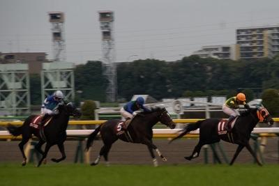 府中牝馬Sは、クロコスミアがGI馬3頭を振りきって逃げ切り重賞初制覇_b0015386_21334573.jpg