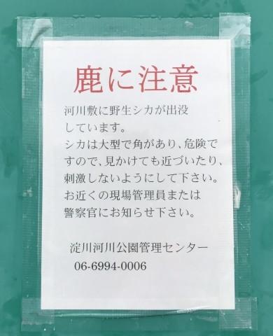 b0176192_12453543.jpg