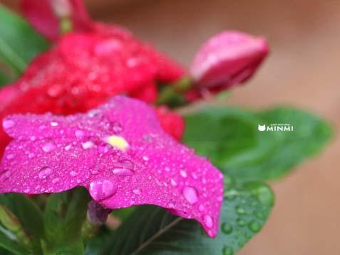 雨の土曜日(≧▽≦)_c0140599_12063602.jpg