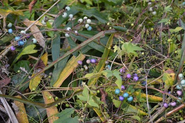 さいたま緑の森博物館 から 野山北・六道山公園へ 【 前編 】_c0124100_18263093.jpg