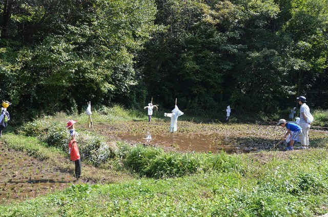 さいたま緑の森博物館 から 野山北・六道山公園へ 【 前編 】_c0124100_18265520.jpg