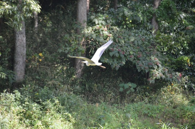 さいたま緑の森博物館 から 野山北・六道山公園へ 【 後編 】_c0124100_18461476.jpg