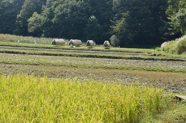 さいたま緑の森博物館 から 野山北・六道山公園へ 【 後編 】_c0124100_18461858.jpg