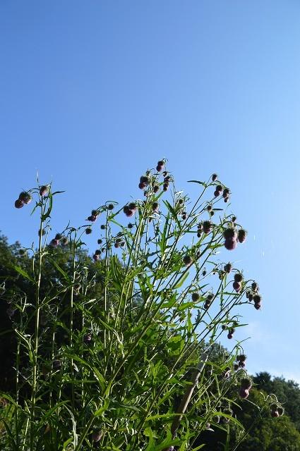 さいたま緑の森博物館 から 野山北・六道山公園へ 【 後編 】_c0124100_18464153.jpg