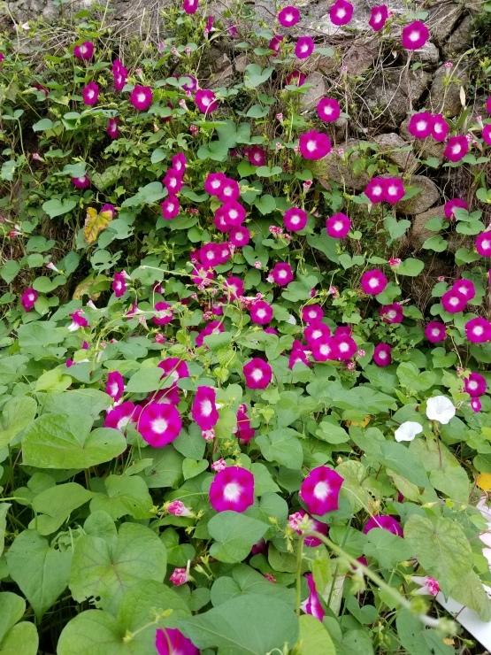 裏山歩き_f0219710_11111187.jpg