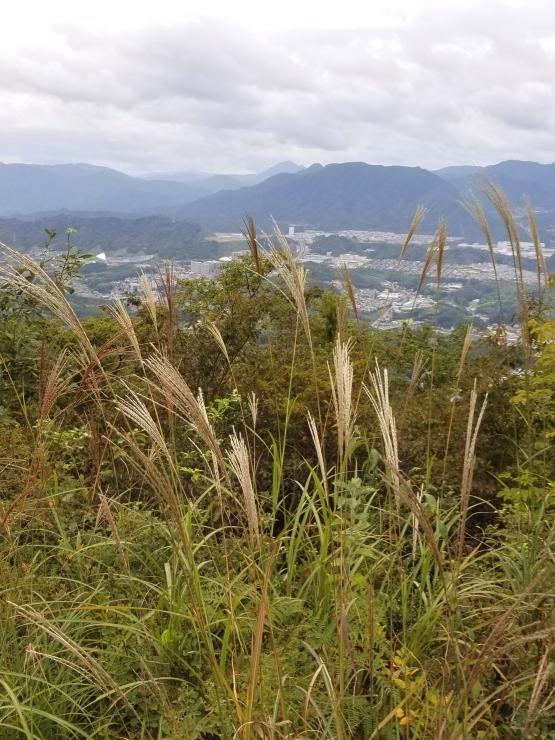 裏山歩き_f0219710_11261550.jpg