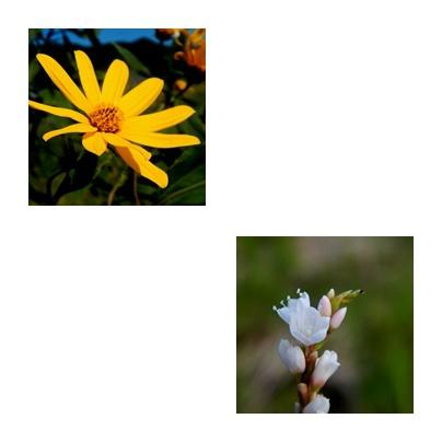 b0352112_15494035.jpg