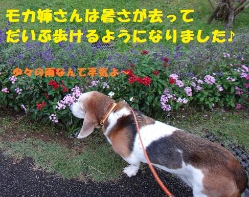 f0121712_08595216.jpg