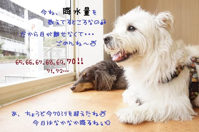 d0220513_13503135.jpg