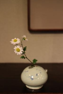 花だより 野菊_a0279848_16324425.jpg