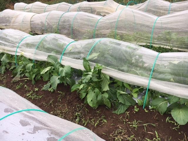 今朝も雨 蚕豆の畝づくりは延期します 各畝の一部 画像をUPします_c0222448_11421389.jpg