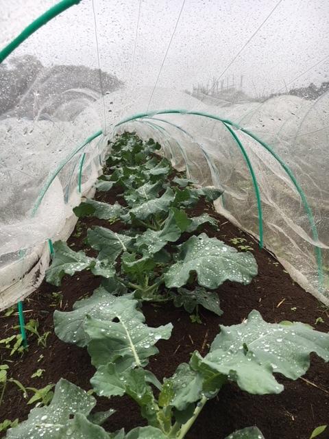 今朝も雨 蚕豆の畝づくりは延期します 各畝の一部 画像をUPします_c0222448_11422788.jpg