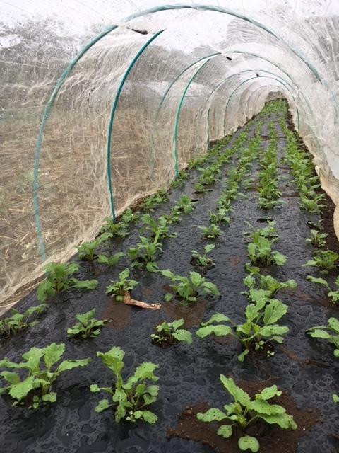 今朝も雨 蚕豆の畝づくりは延期します 各畝の一部 画像をUPします_c0222448_11430881.jpg