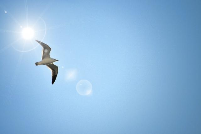 No.3689 10月15日(日):目指すは「自由」で「自在」であること_b0113993_08321207.jpg