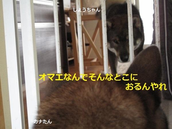 f0143123_11250141.jpg