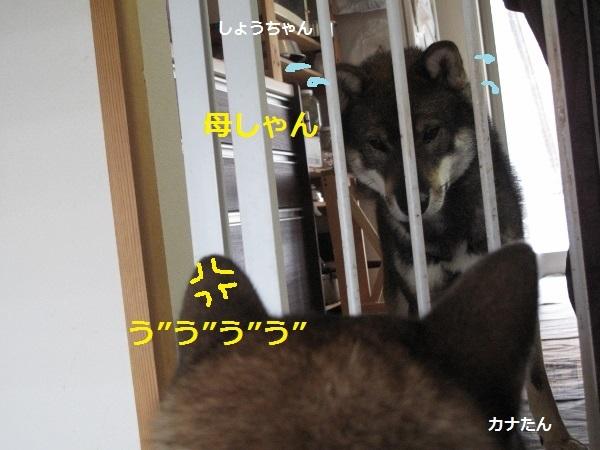 f0143123_11250880.jpg