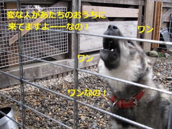 f0143123_20455027.jpg