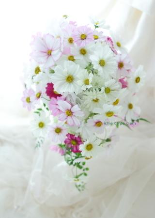 セミキャスケードブーケ コスモスのブーケ、八芳園さまへ  翌日に押し花に_a0042928_14235582.jpg