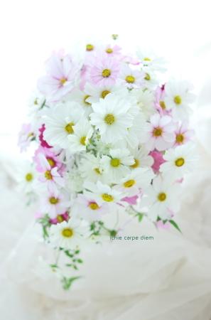 セミキャスケードブーケ コスモスのブーケ、八芳園さまへ  翌日に押し花に_a0042928_14240492.jpg