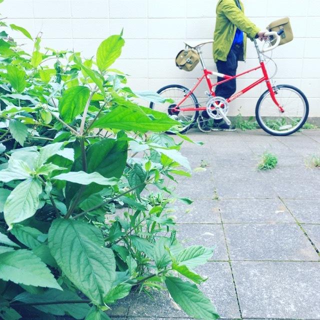 2018 BRUNO 限定モデル 「 VENTURA WORLD TRAVEL 」 ブルーノ ベンチュラ リミテッド ミニベロ クロスバイク おしゃれ自転車 自転車女子 自転車ガール ポタリング_b0212032_20261598.jpg