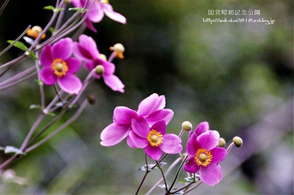 昭和記念公園の秋をカメラに(^^♪_e0052135_21121197.jpg